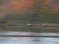 10-22-11-Little Seneca Lake-0523